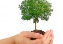 Más árboles para Pinto