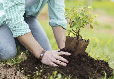 Ecologistas de Pinto, actividad de siembra