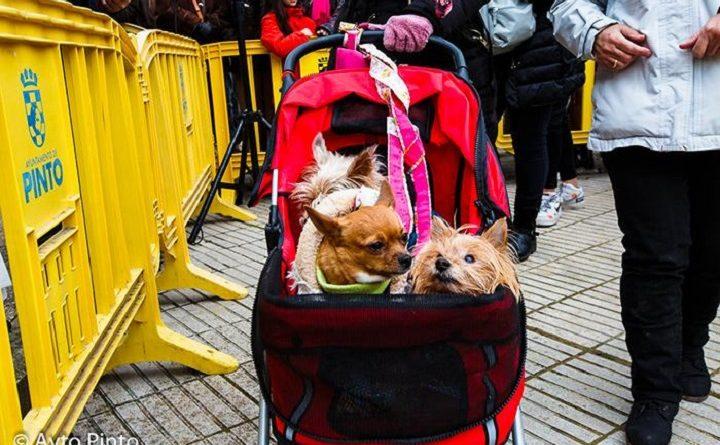 Mascotas en la celebración de San Antón