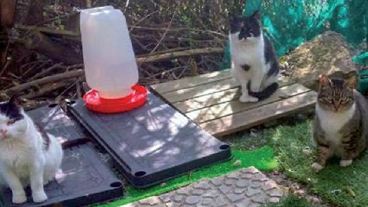 Adjudicado el Control de Colonias Felinas
