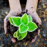 Volt: recuperación a través de la ecología